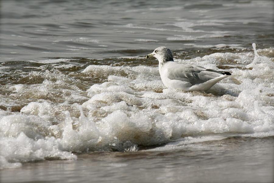 Beach Photograph - Bathing  by Natalija Wortman