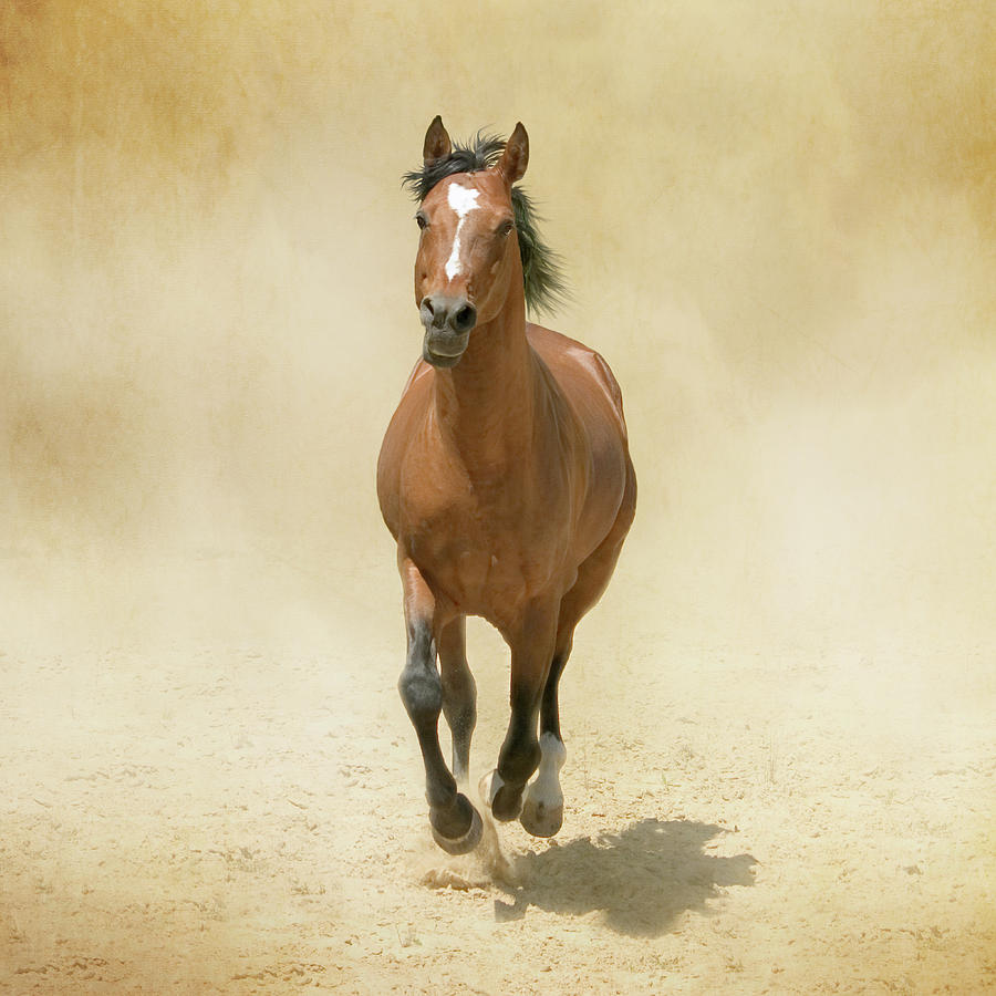 Bay Horse Galloping In Dust Photograph by Christiana Stawski