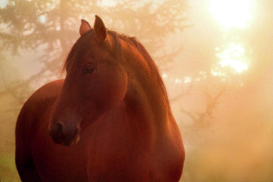 Horizontal Photograph - Bay Horse In Fog At Sunrise by Anne Louise MacDonald of Hug a Horse Farm