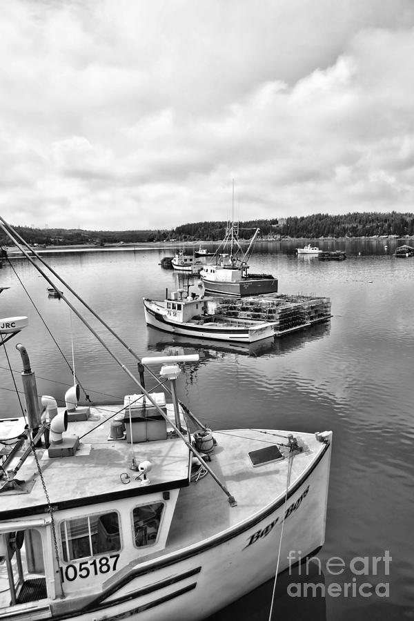 Bay Life by Traci Cottingham