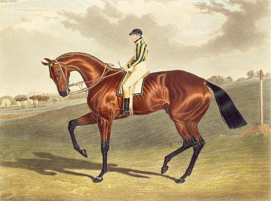 Bay Middleton Painting - Bay Middleton Winner Of The Derby In 1836 by John Frederick Herring Snr