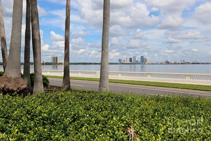 Tampa Photograph - Bayshore Through Palms by Carol Groenen