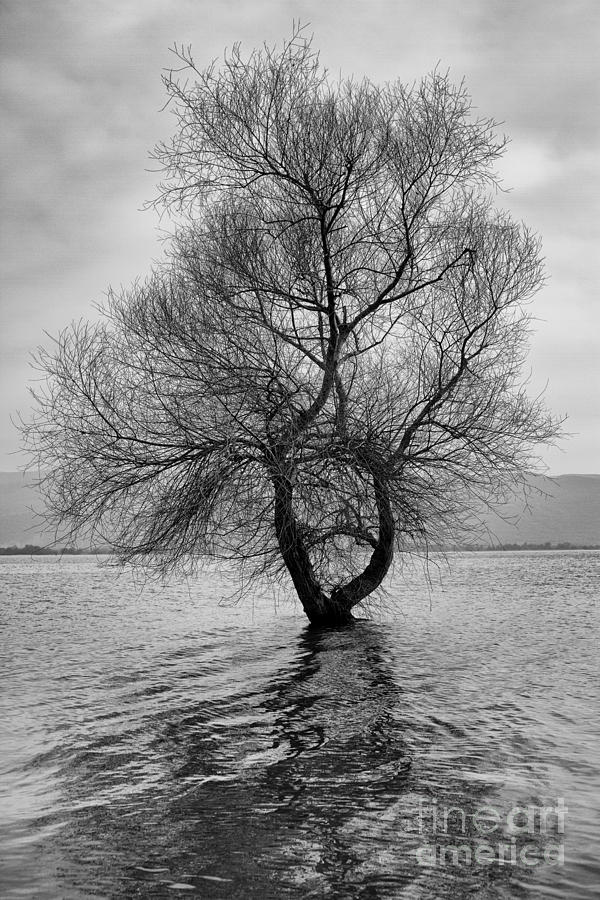 Trees Photograph - Be Alone  by Zafer GUDER