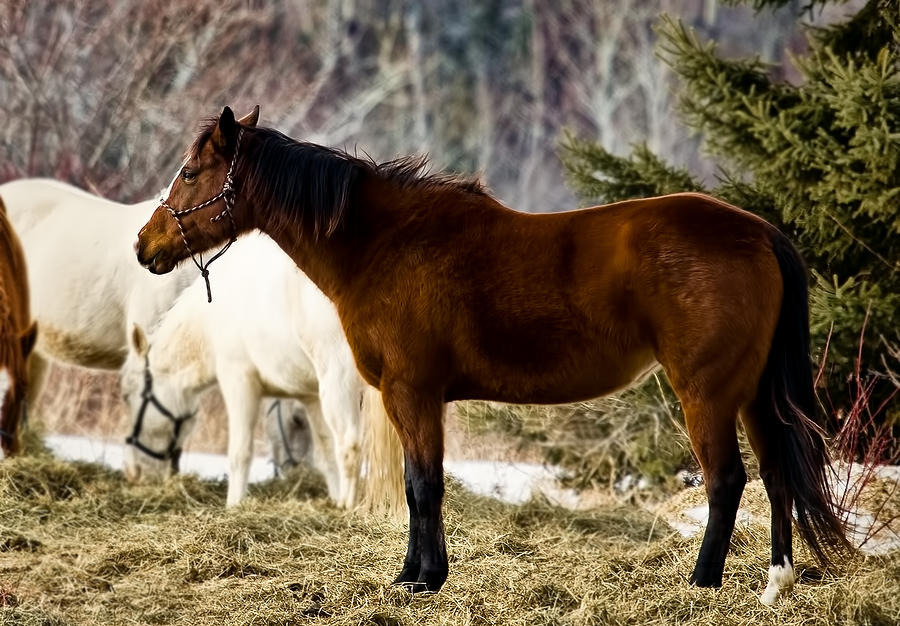 Equine Photograph - Be My Friend by Gary Smith