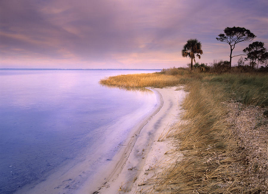 00175930 Photograph - Beach Along Saint Josephs Bay Florida by Tim Fitzharris