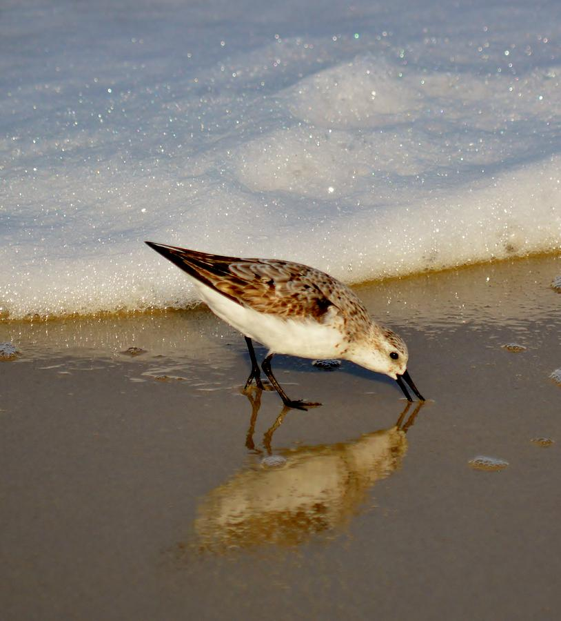 Beach Bird Photograph