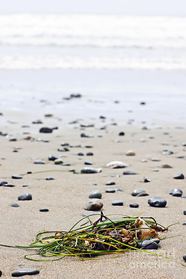 Pacific Photograph - Beach Detail On Pacific Ocean Coast Of Canada by Elena Elisseeva