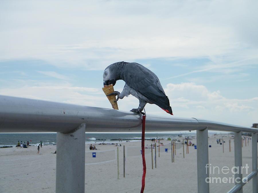 Bird Digital Art - Beach It Parot by Laurence Oliver