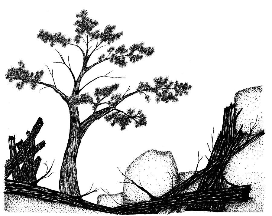 Landscape Drawing - Beach Pine by Jason Carroll