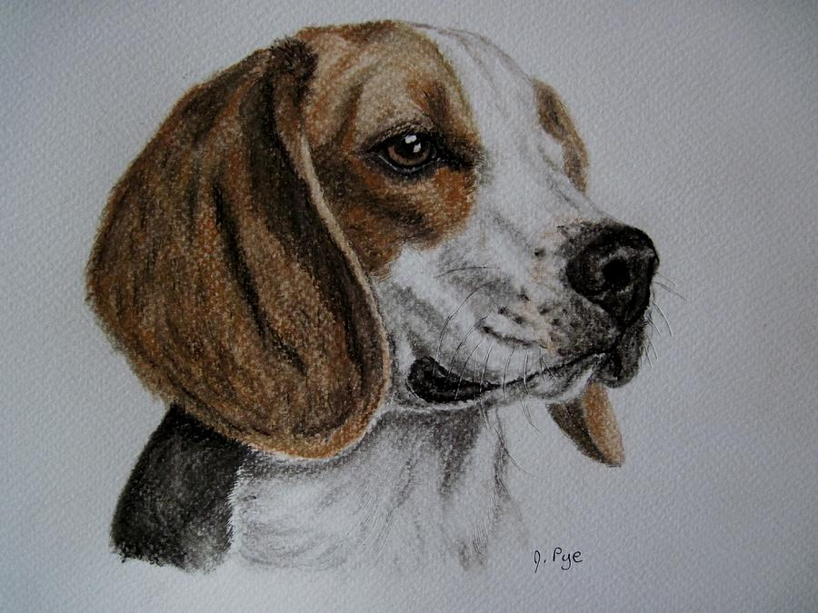 Beagle Drawing By Joan Pye