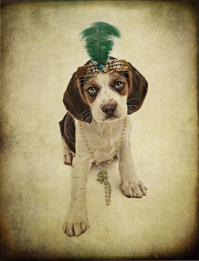 Pet Photograph - Beagle Puppy Flapper  by Susan Schmitz