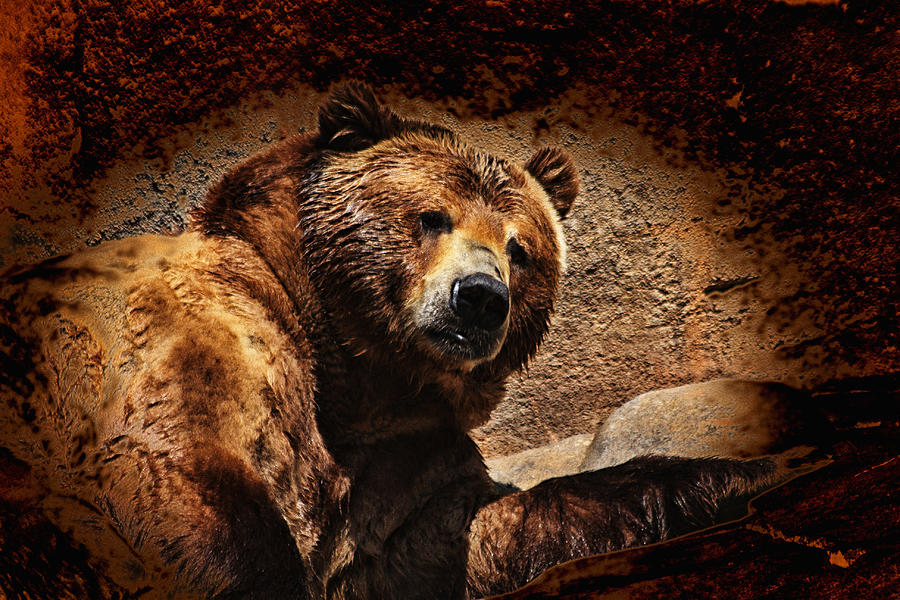 Bear Photograph - Bear Artistic by Karol Livote