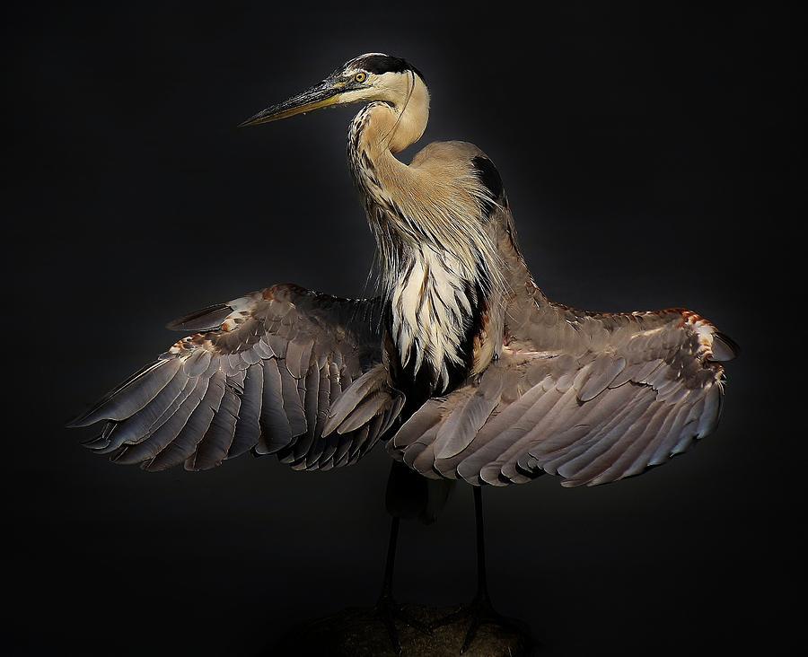 Blue Heron Photograph - Beautiful Blue Heron Wings by Paulette Thomas