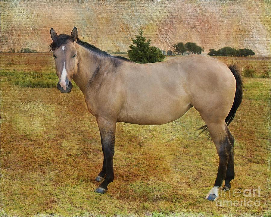 Horse Photograph - Beautiful Buckskin by Betty LaRue