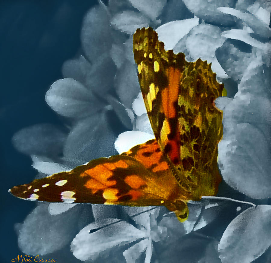 Nature Photograph - Beautiful Butterfly by Mikki Cucuzzo