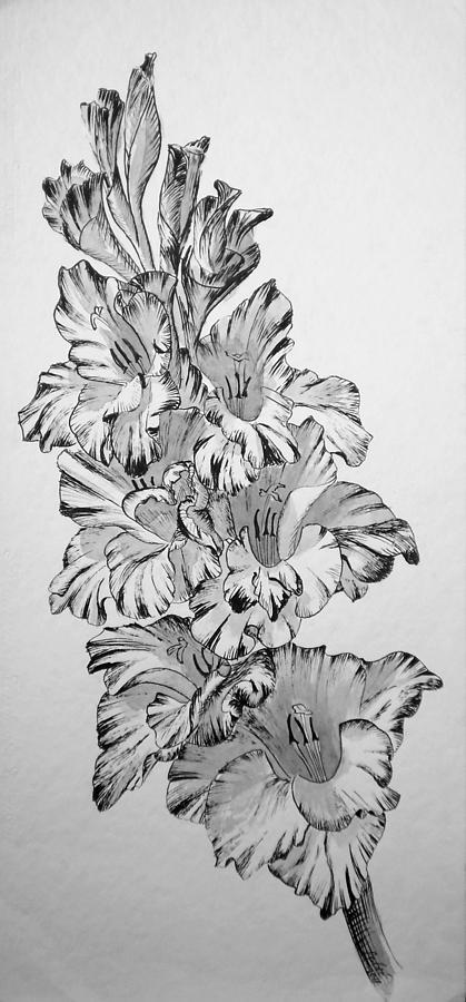 Drawing Painting - Beautiful Gladiolas by Eleonora Perlic