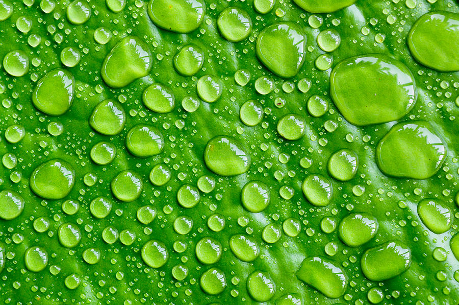 Abstract Photograph - Beautiful Green Leaf With  Water Drops by Chatuporn Sornlampoo