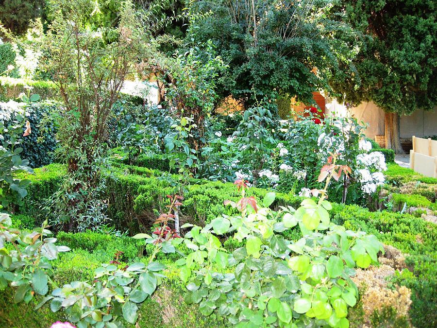 Beautiful Green Spanish Garden Granada Spain Photograph By