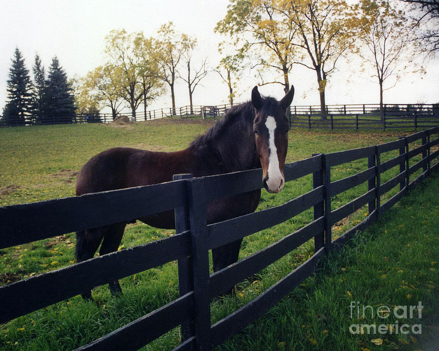 Beautiful Horse Photos Photograph - Beautiful Horse In Pasture Nature Landscape by Kathy Fornal