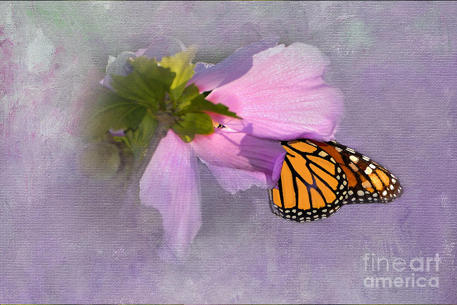 Monarch Butterfly Photograph - Beautiful In Pink by Betty LaRue