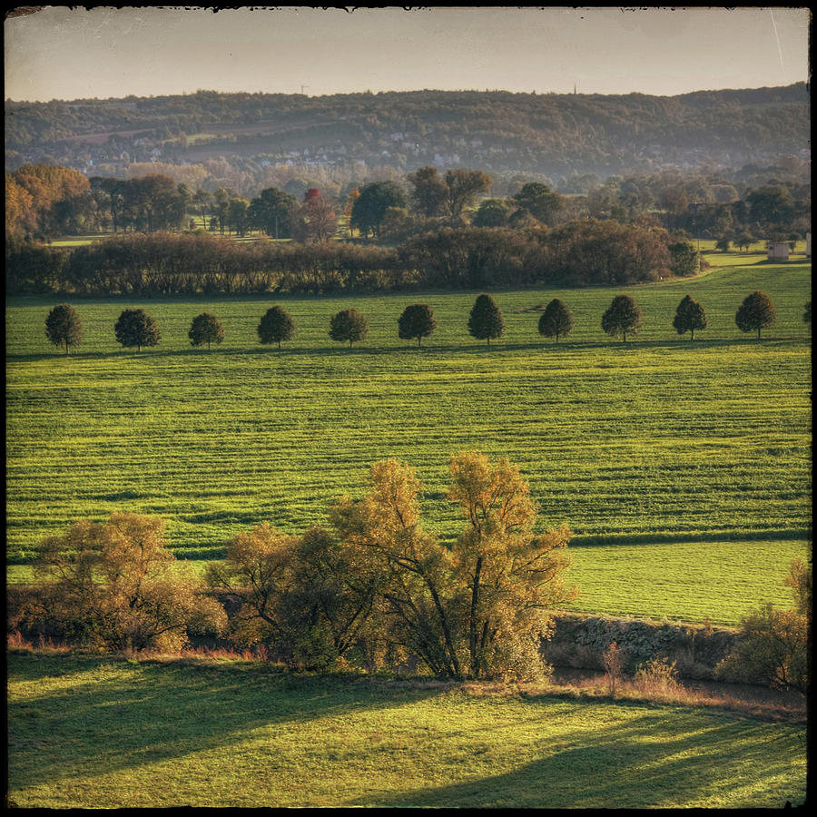 Square Photograph - Beautiful Landscape With Trees And Field by Fsn