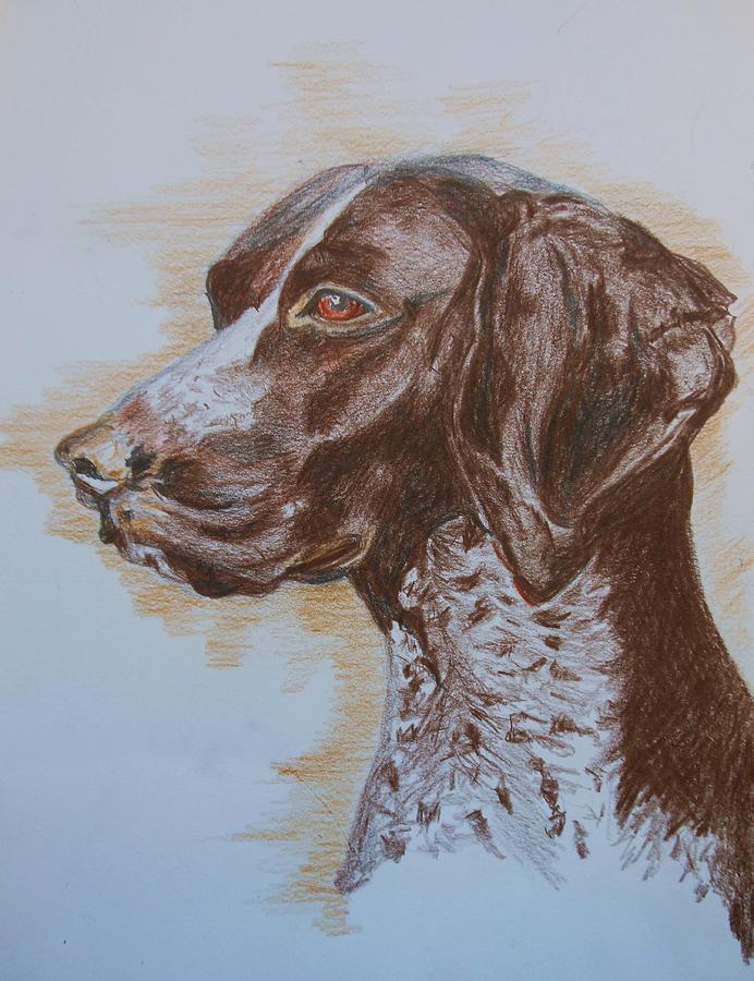 Dogs Drawing - Beautiful Maizie by Deborah Gorga