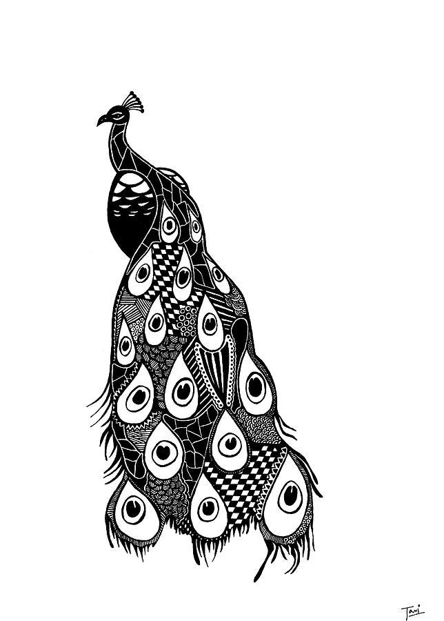 Beautiful Peacock Drawing By Tia Sachdeva