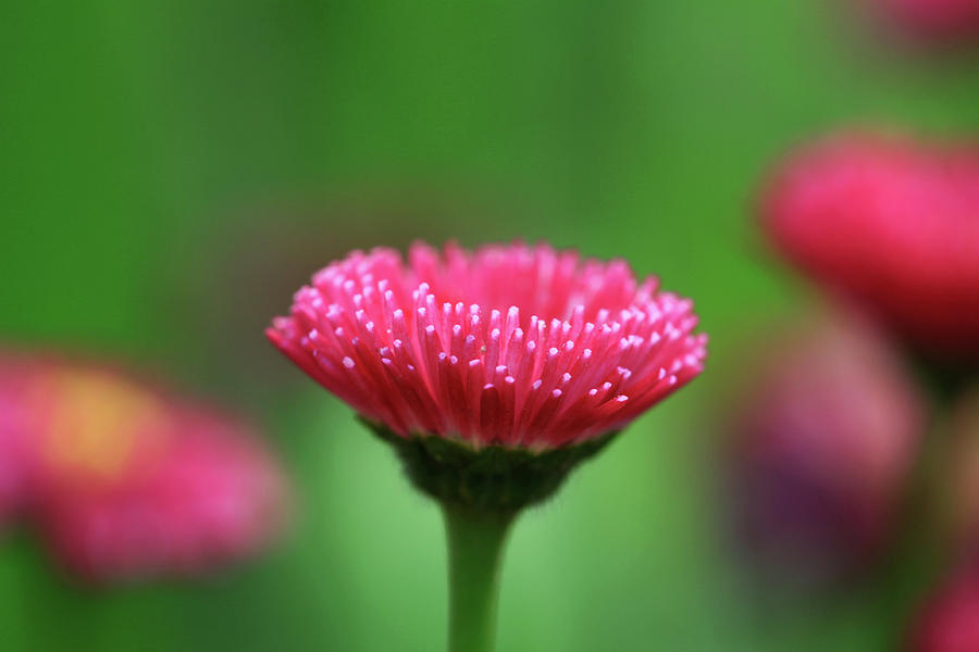 Beautiful Pink Flower Photograph By Cheap Price For Nice