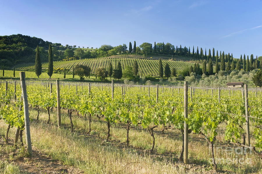 Agriculture Photograph - Beautiful Vineyard by Rob Tilley