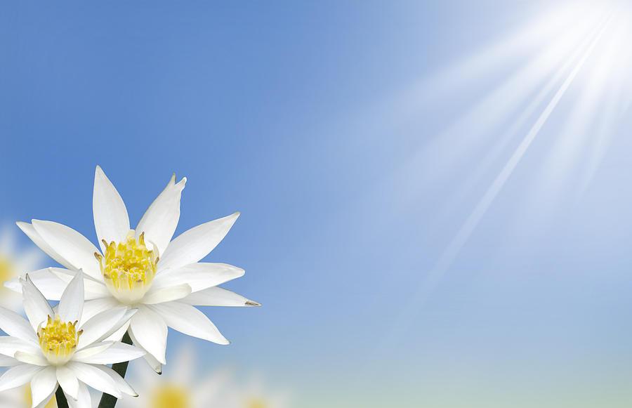 Abstract Photograph - Beautiful White Lotus Flower  by Natthawut Punyosaeng