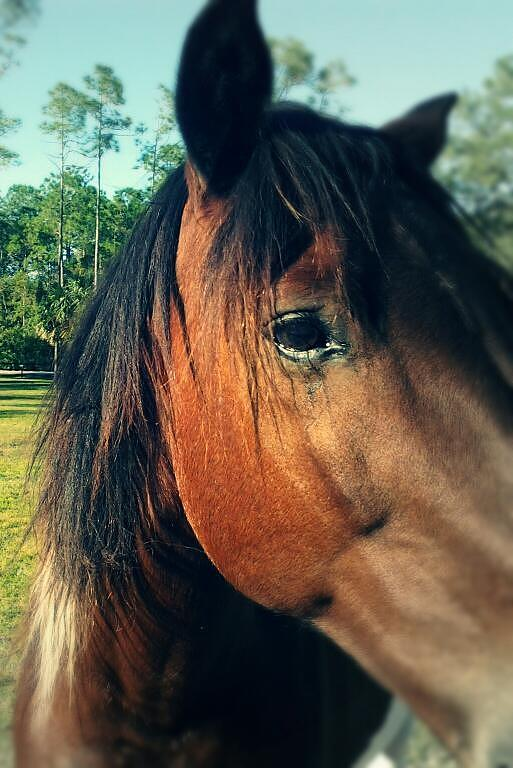 Horse Photograph - Beauty by Chasity Johnson