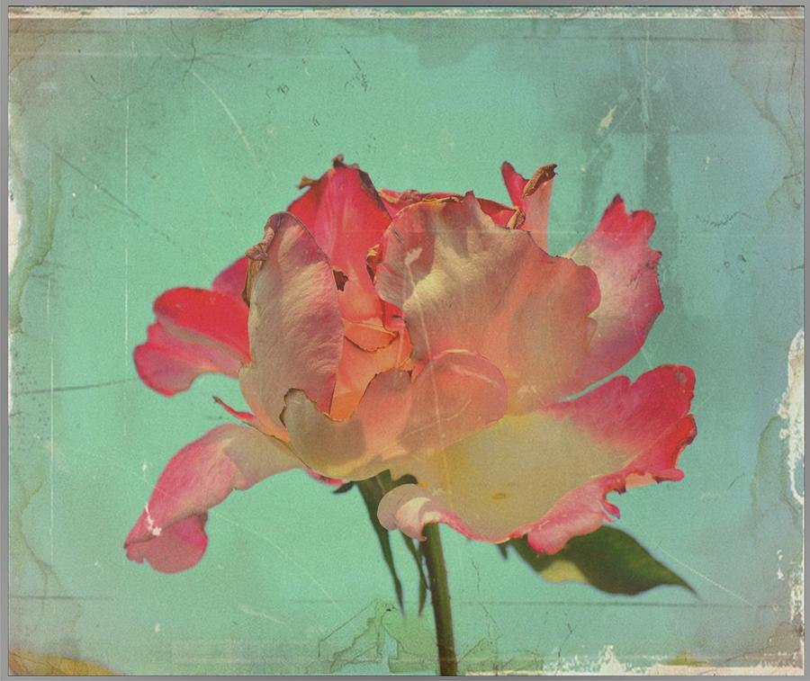 Pink Digital Art - Beauty Ephemeral by Paulo Zerbato
