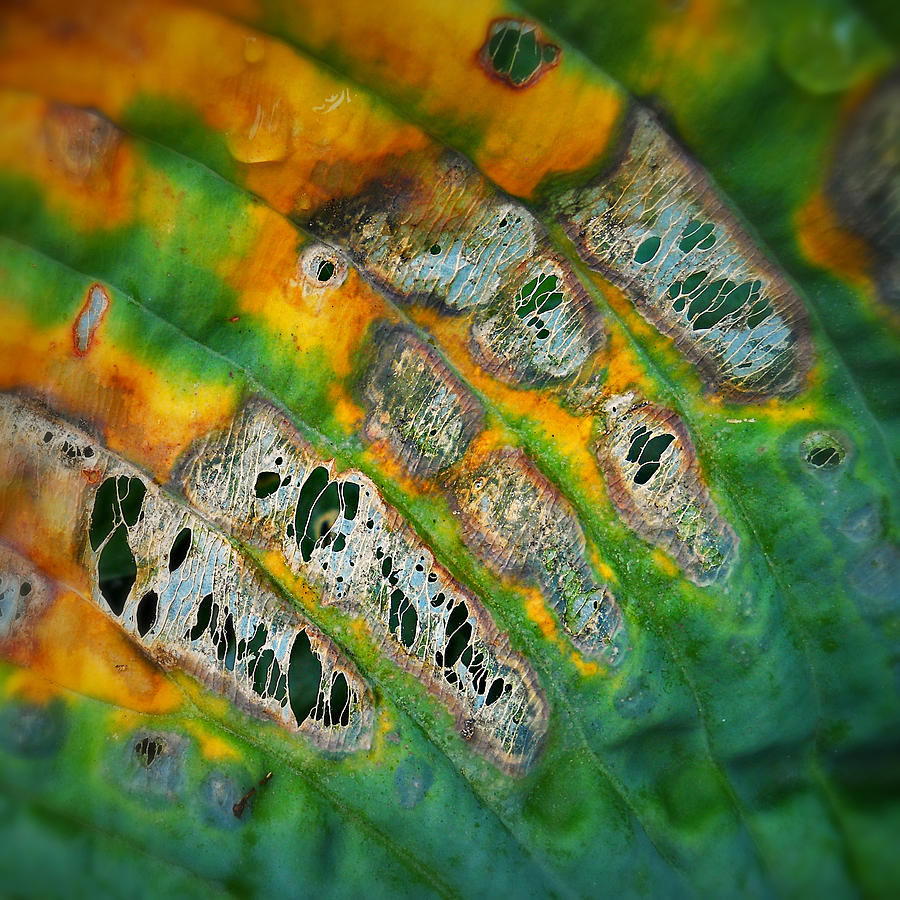 Leaf Photograph - Beauty In Decay by Paul Causie