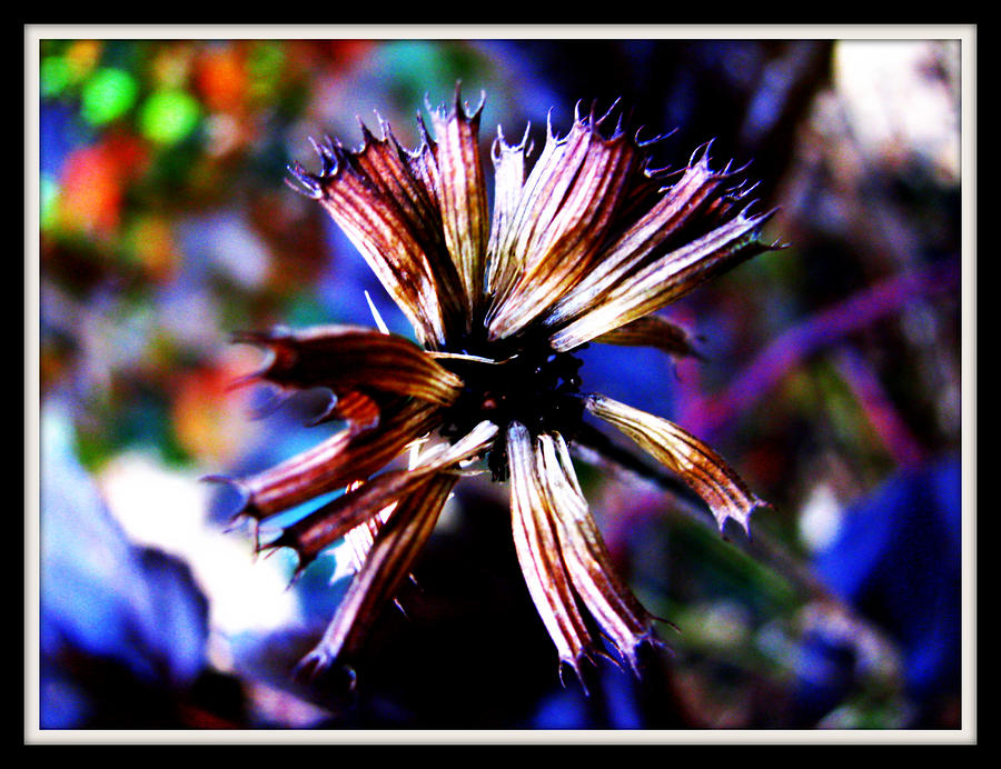 Flower Photograph - Beauty In Leftovers by Janet Backhaus