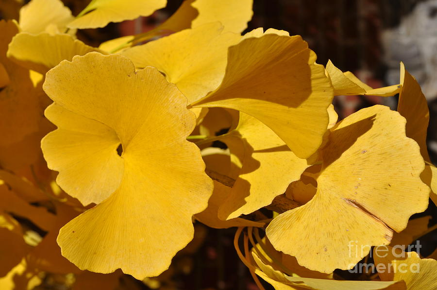Yellow Leaves Photograph - Beauty In The Leaves by Denise Ellis