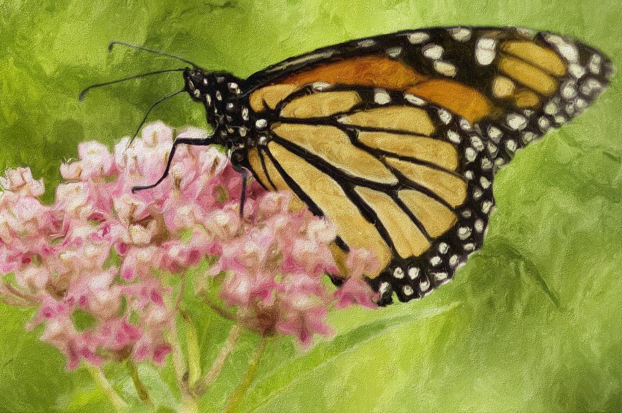 Butterfly Photograph - Beauty Of Nature by Jack Zulli
