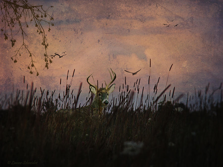 Deer Photograph - Bedding Down For Evening by Lianne Schneider