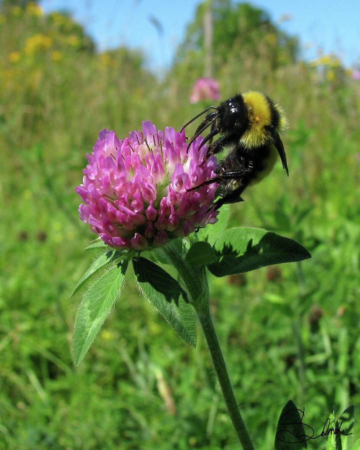 Honey Bee Photograph - Bee-autiful  by Sarah  Lalonde