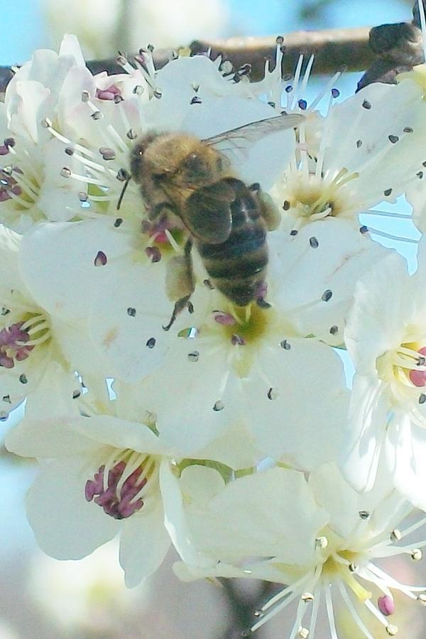 Bee Nice Digital Art by Wide Awake Arts