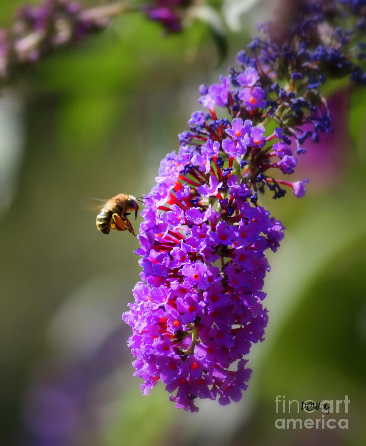 Bee Photograph - Bee-utiful by Patrick Witz