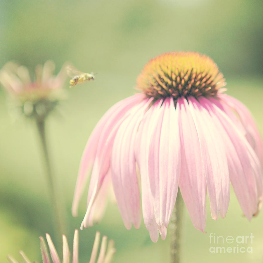 Floral Photograph - Beeautiful by Kim Fearheiley