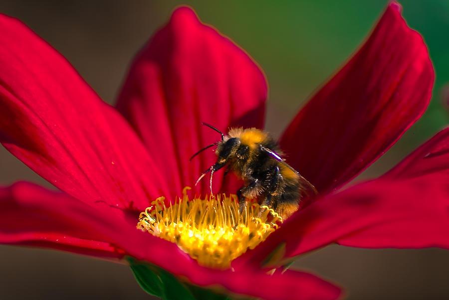Coronavirus Photograph - Beebot by Stwayne Keubrick