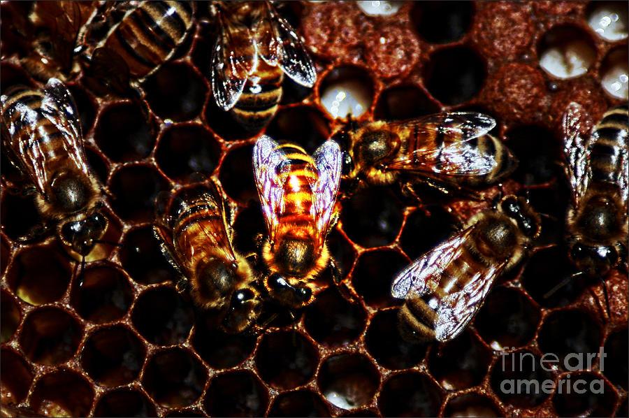 Bees Work Digital Art by David Taylor