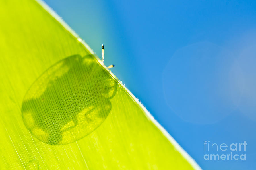 Attractive Photograph - Beetle And Blue Sky by Peerasith Chaisanit