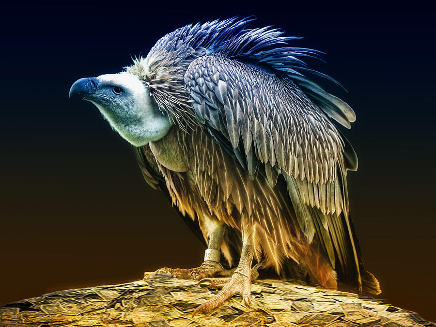 Vulture Capitalist Photograph - Beggars Banquet by Joachim G Pinkawa