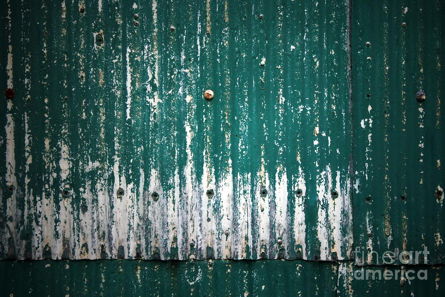 Green Photograph - Behind the Green Shed by Stephen Mitchell