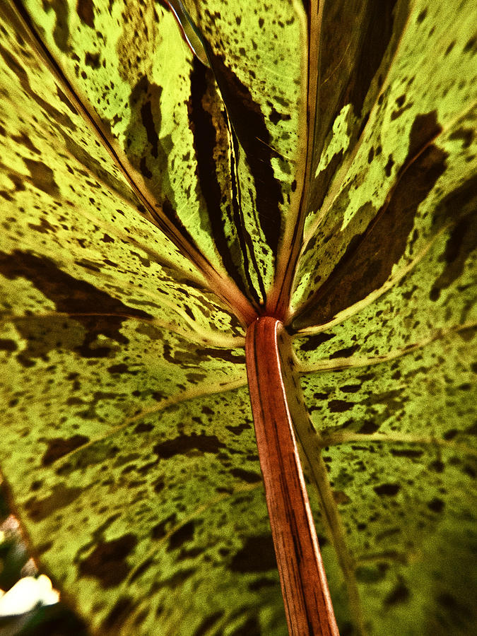 Leaf Photograph - Behind The Leaves by Joe Carini