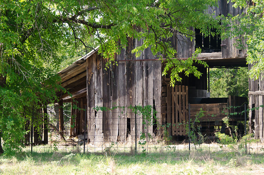 Barns Photograph - Behind The Trees by Lisa Moore