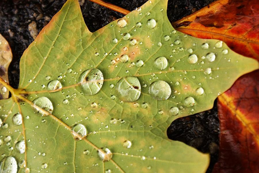 Leaf Photograph - Bejeweled Leaves by Matthew Green