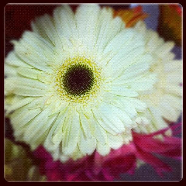 Petals Photograph - Believe by Kristina Parker